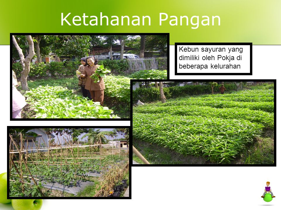 Ketahanan Pangan Kebun sayuran yang dimiliki oleh Pokja di beberapa kelurahan 40