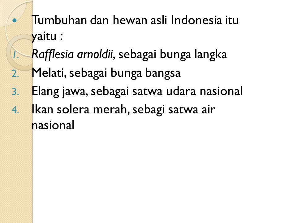 Tumbuhan dan hewan asli Indonesia itu yaitu :