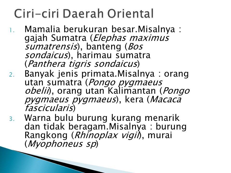 Ciri-ciri Daerah Oriental