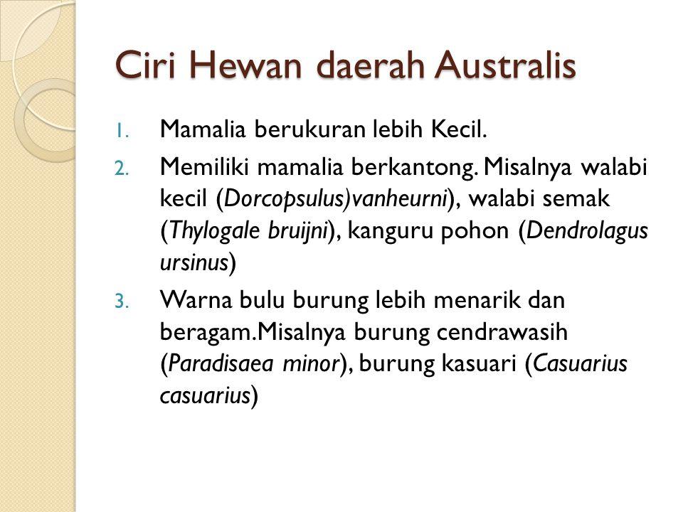 Ciri Hewan daerah Australis
