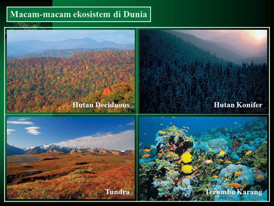 Macam-macam ekosistem di Dunia