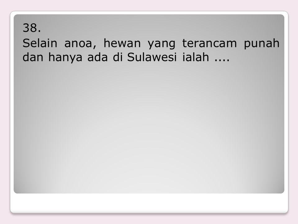38. Selain anoa, hewan yang terancam punah dan hanya ada di Sulawesi ialah ....