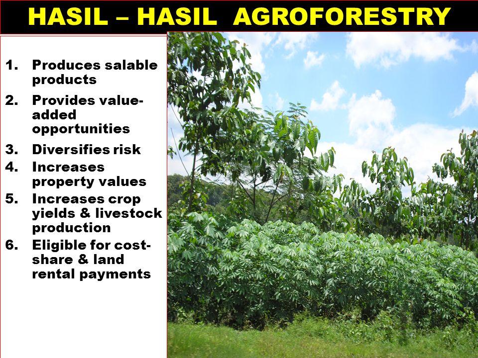 HASIL – HASIL AGROFORESTRY