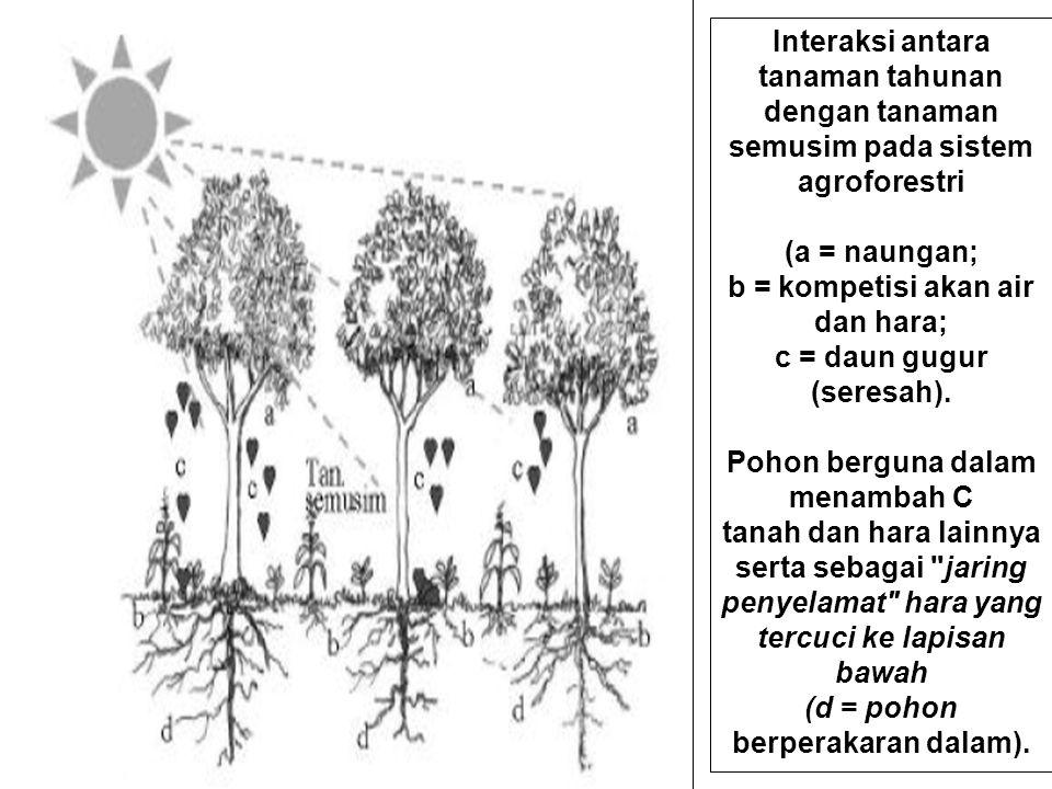 b = kompetisi akan air dan hara; c = daun gugur (seresah).
