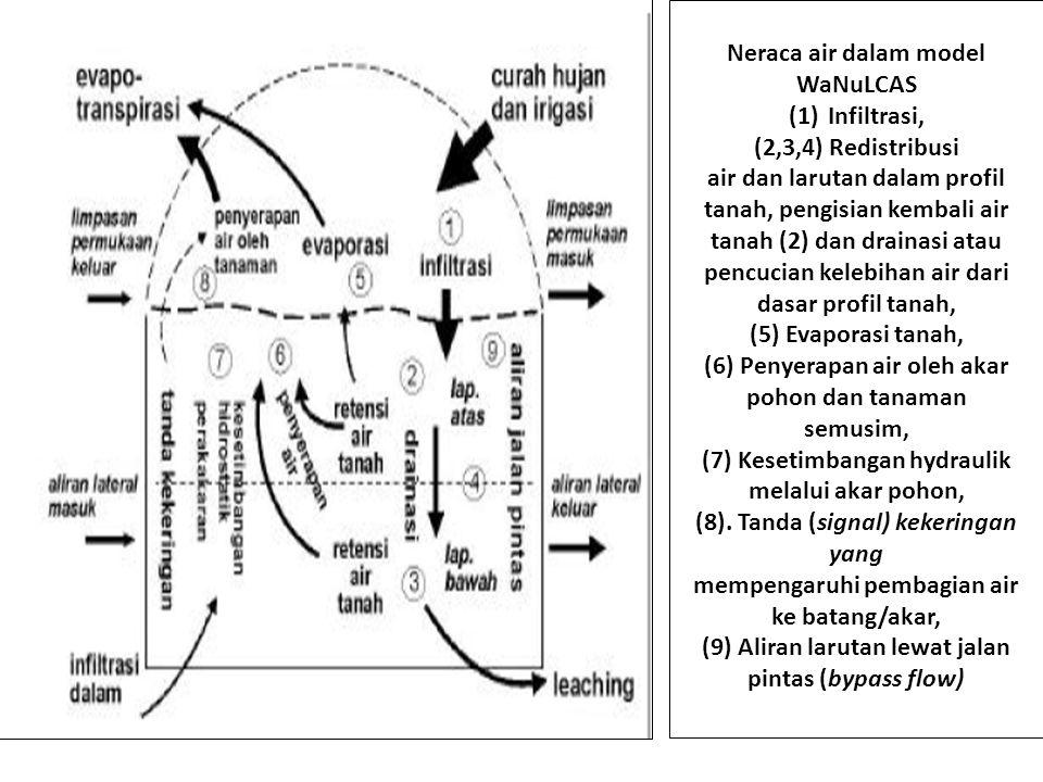 Neraca air dalam model WaNuLCAS Infiltrasi, (2,3,4) Redistribusi