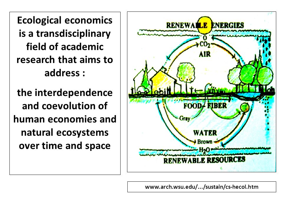 Ecological economics is a transdisciplinary field of academic research that aims to address :