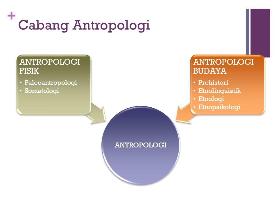 Cabang Antropologi ANTROPOLOGI FISIK ANTROPOLOGI BUDAYA ANTROPOLOGI
