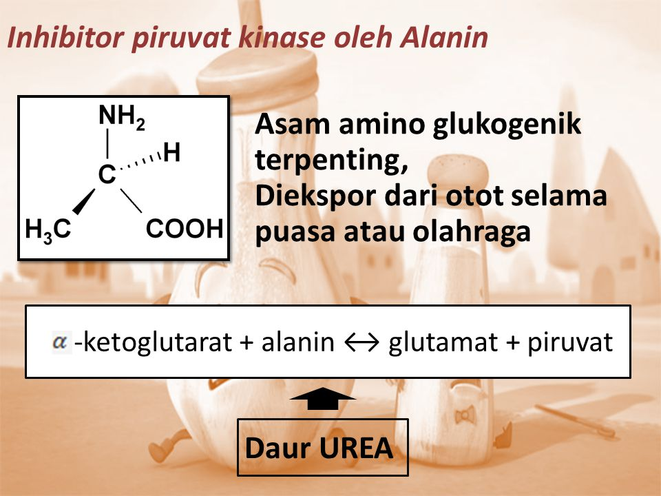 Inhibitor piruvat kinase oleh Alanin