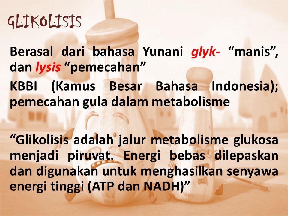 GLIKOLISIS Berasal dari bahasa Yunani glyk- manis , dan lysis pemecahan KBBI (Kamus Besar Bahasa Indonesia); pemecahan gula dalam metabolisme.