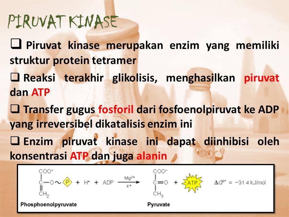 PIRUVAT KINASE Piruvat kinase merupakan enzim yang memiliki struktur protein tetramer. Reaksi terakhir glikolisis, menghasilkan piruvat dan ATP.
