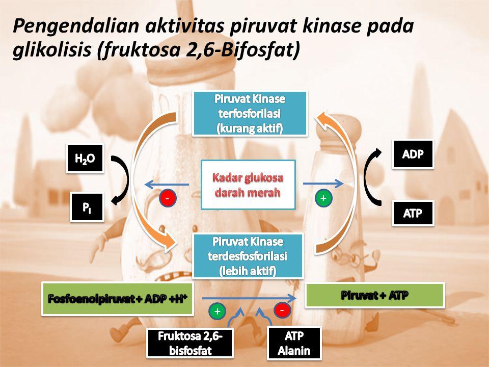 Kadar glukosa darah merah Fosfoenolpiruvat + ADP +H+