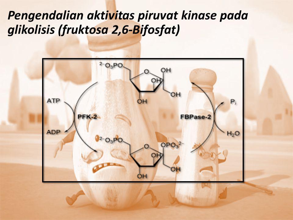 Pengendalian aktivitas piruvat kinase pada glikolisis (fruktosa 2,6-Bifosfat)