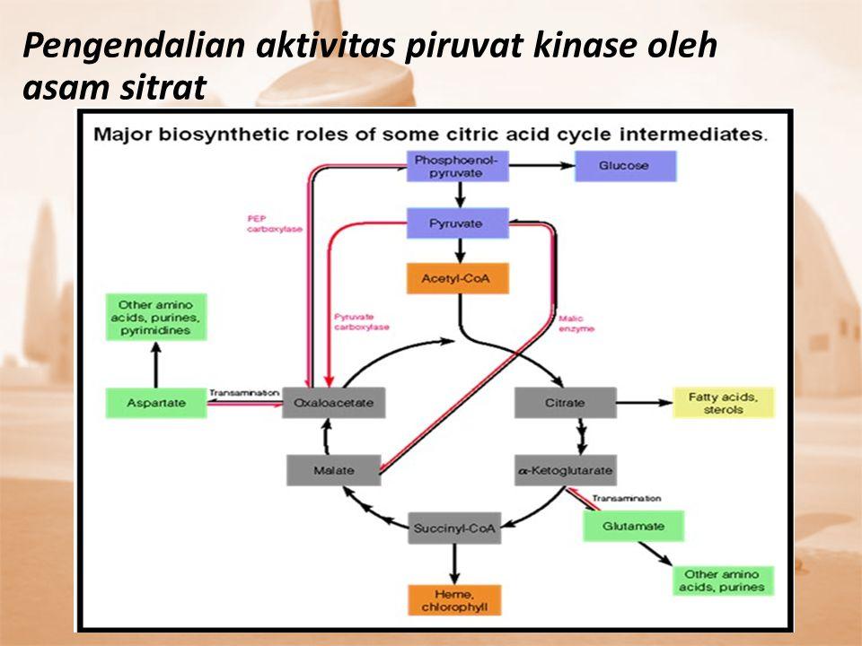 Pengendalian aktivitas piruvat kinase oleh asam sitrat