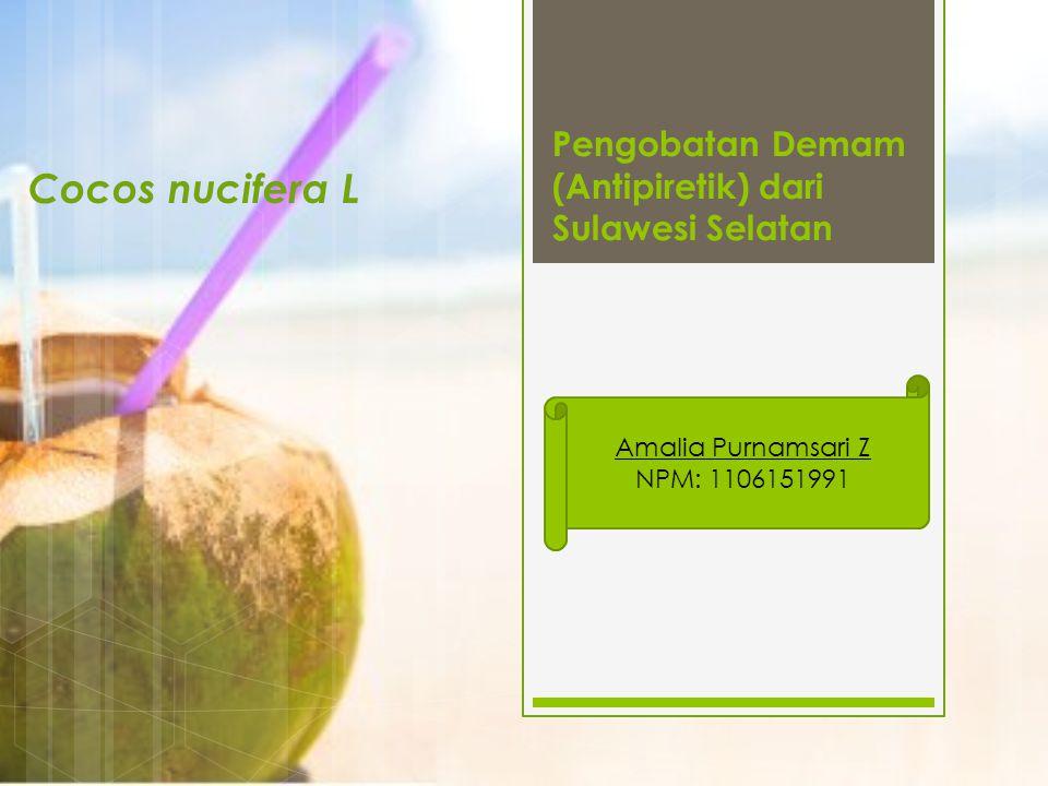 Pengobatan Demam (Antipiretik) dari Sulawesi Selatan