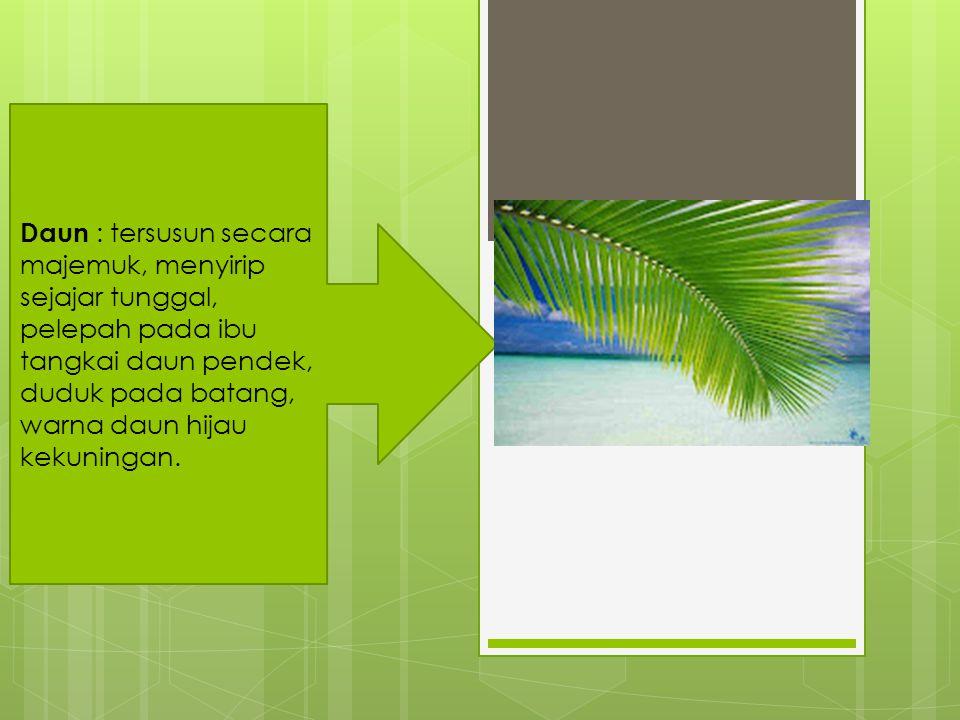 Daun : tersusun secara majemuk, menyirip sejajar tunggal, pelepah pada ibu tangkai daun pendek, duduk pada batang, warna daun hijau kekuningan.