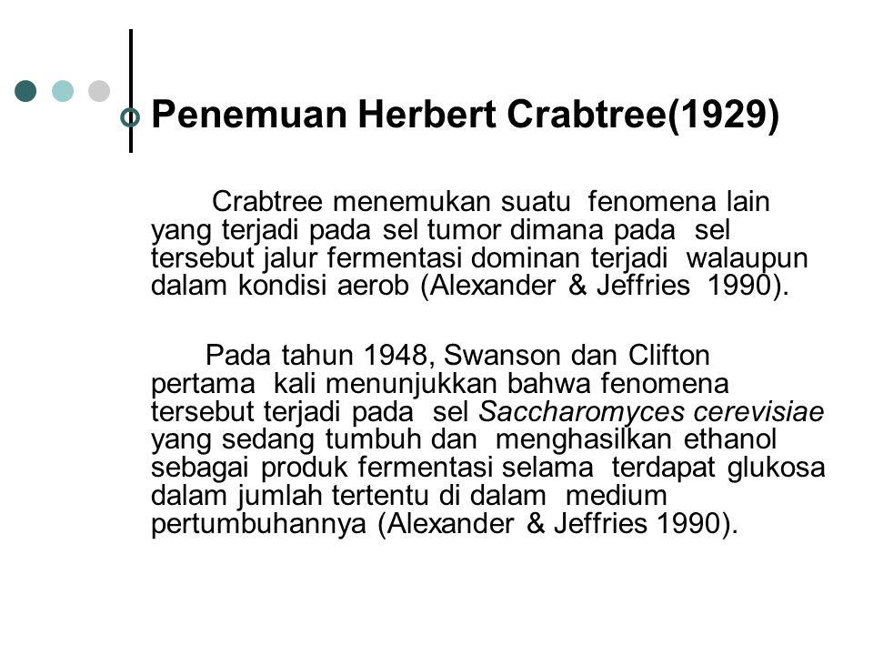 Penemuan Herbert Crabtree(1929)