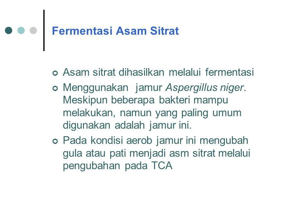 Fermentasi Asam Sitrat