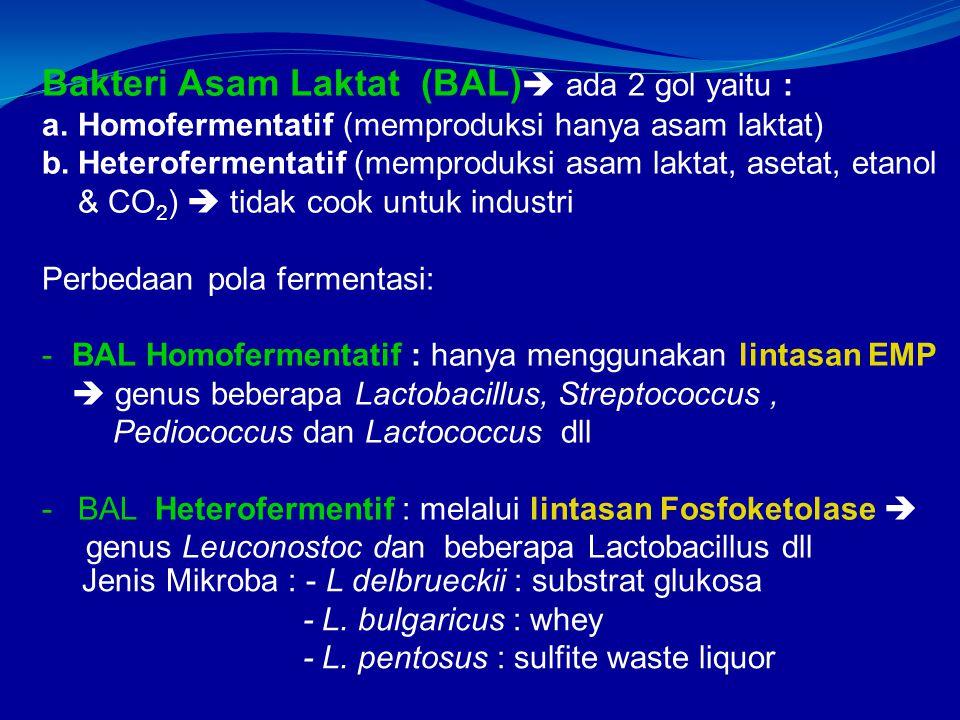 Bakteri Asam Laktat (BAL) ada 2 gol yaitu :