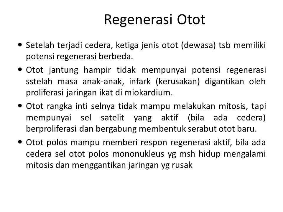 Regenerasi Otot Setelah terjadi cedera, ketiga jenis otot (dewasa) tsb memiliki potensi regenerasi berbeda.