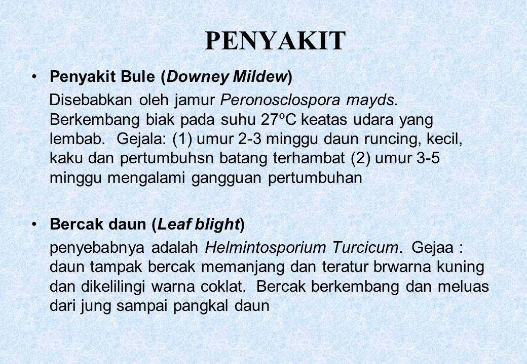 PENYAKIT Penyakit Bule (Downey Mildew)