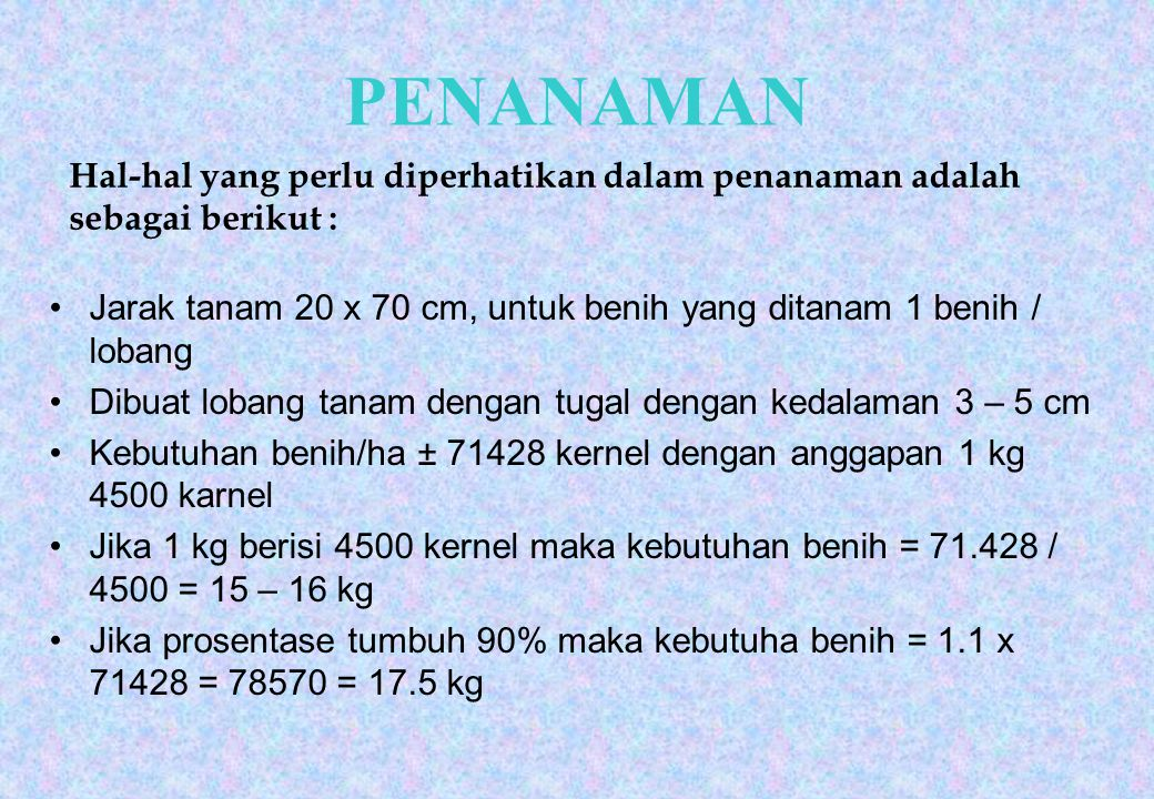 PENANAMAN Hal-hal yang perlu diperhatikan dalam penanaman adalah sebagai berikut : Jarak tanam 20 x 70 cm, untuk benih yang ditanam 1 benih / lobang.