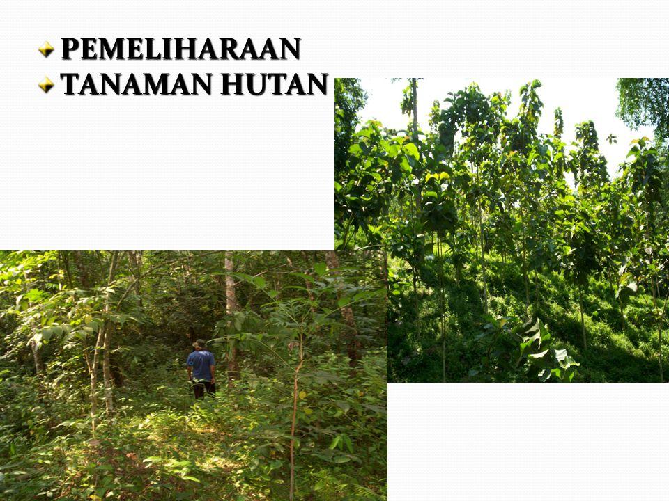 PEMELIHARAAN TANAMAN HUTAN