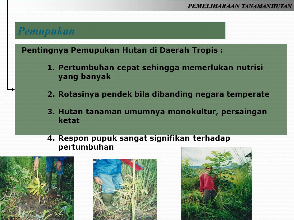 Pemupukan Pentingnya Pemupukan Hutan di Daerah Tropis :