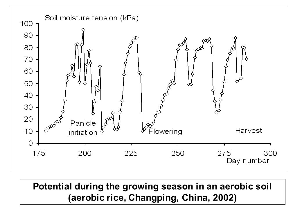 Potential during the growing season in an aerobic soil