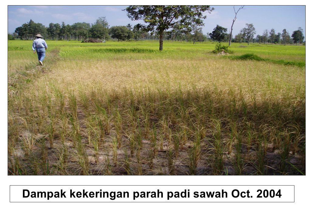 Dampak kekeringan parah padi sawah Oct. 2004