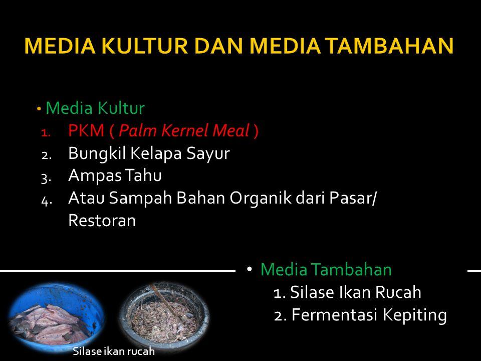 MEDIA KULTUR DAN MEDIA TAMBAHAN