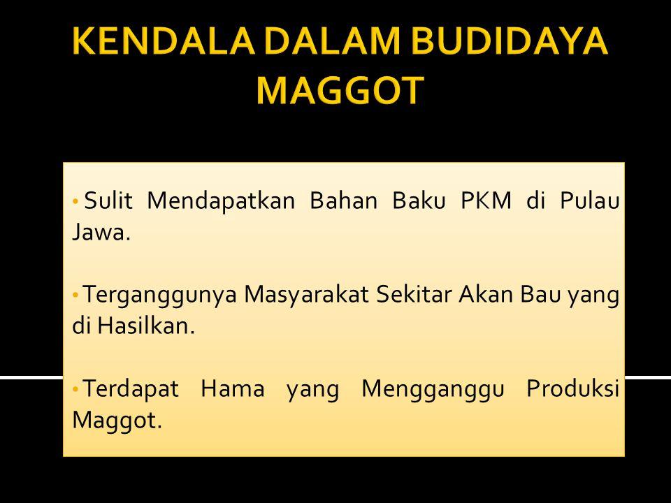 KENDALA DALAM BUDIDAYA MAGGOT