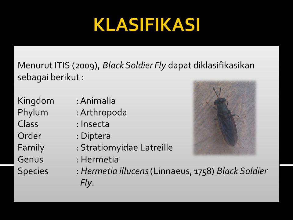 KLASIFIKASI Menurut ITIS (2009), Black Soldier Fly dapat diklasifikasikan sebagai berikut : Kingdom : Animalia.