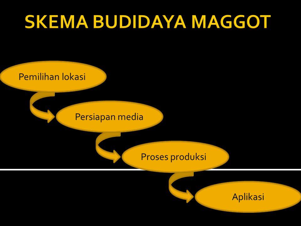 SKEMA BUDIDAYA MAGGOT Pemilihan lokasi Persiapan media Proses produksi