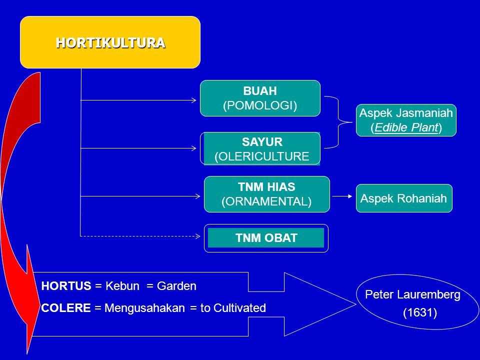 HORTIKULTURA BUAH (POMOLOGI) Aspek Jasmaniah (Edible Plant) SAYUR