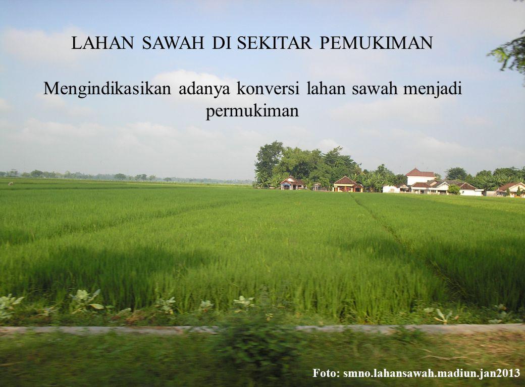 LAHAN SAWAH DI SEKITAR PEMUKIMAN