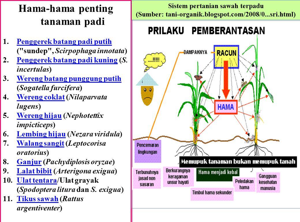 Hama-hama penting tanaman padi