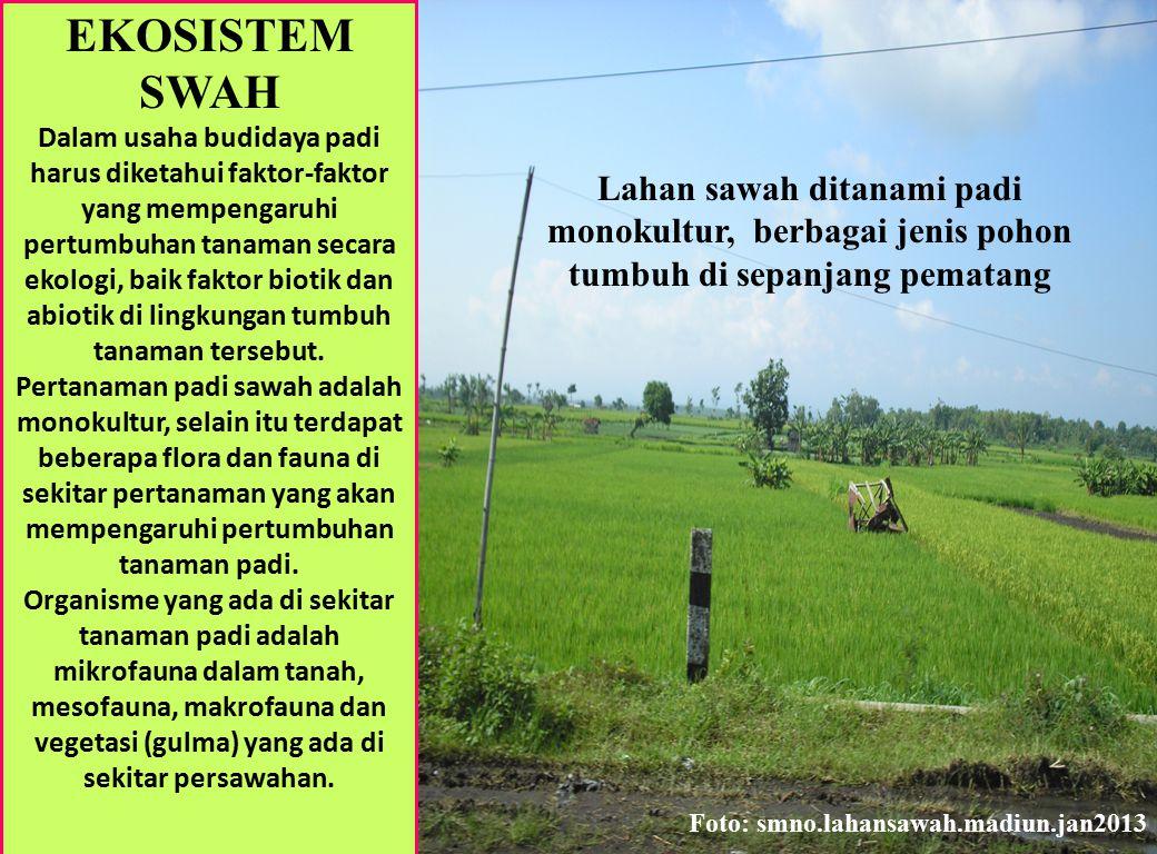 EKOSISTEM SWAH