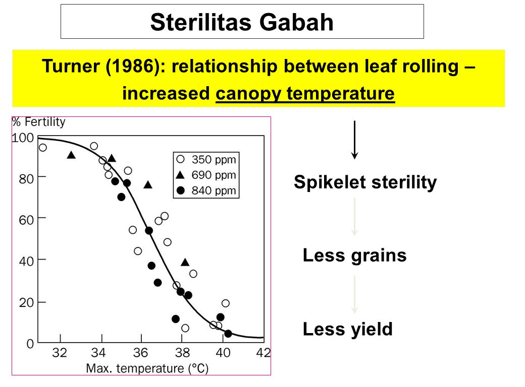 Sterilitas Gabah Turner (1986): relationship between leaf rolling – increased canopy temperature. Spikelet sterility.