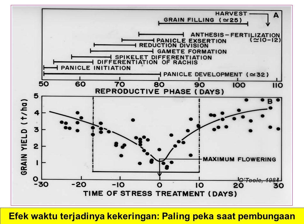 Efek waktu terjadinya kekeringan: Paling peka saat pembungaan