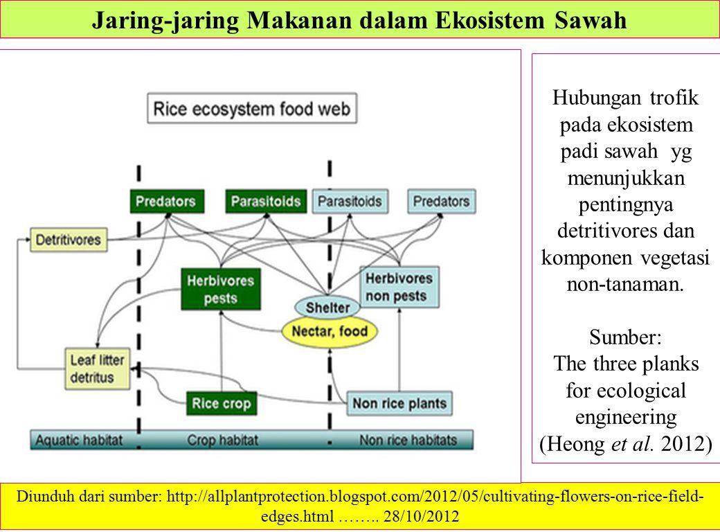 Jaring-jaring Makanan dalam Ekosistem Sawah