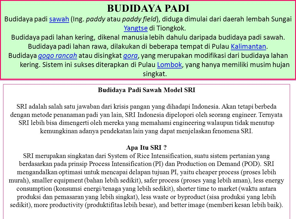 Budidaya Padi Sawah Model SRI