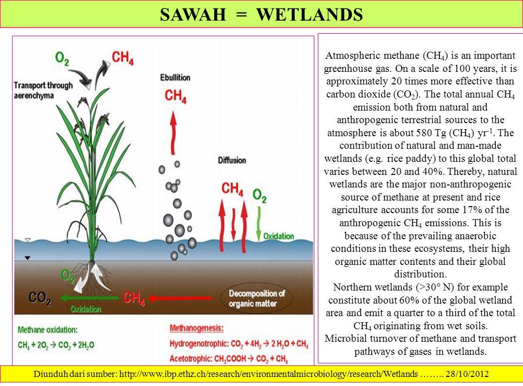 SAWAH = WETLANDS