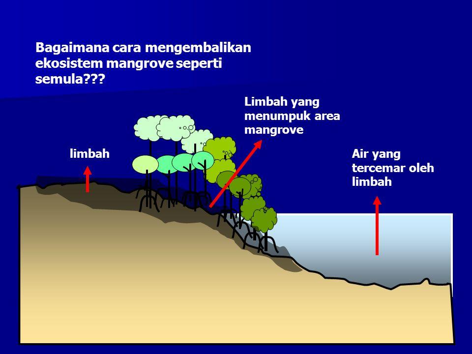 Bagaimana cara mengembalikan ekosistem mangrove seperti semula