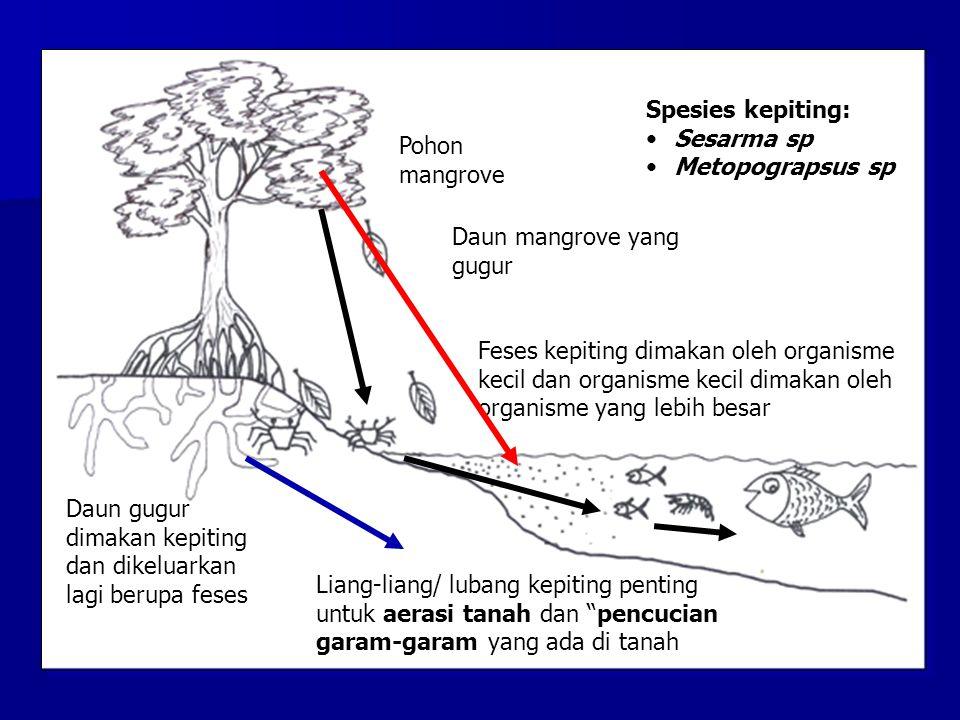Spesies kepiting: Sesarma sp. Metopograpsus sp. Pohon mangrove. Daun mangrove yang gugur.