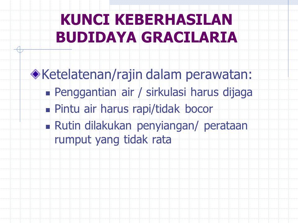 KUNCI KEBERHASILAN BUDIDAYA GRACILARIA