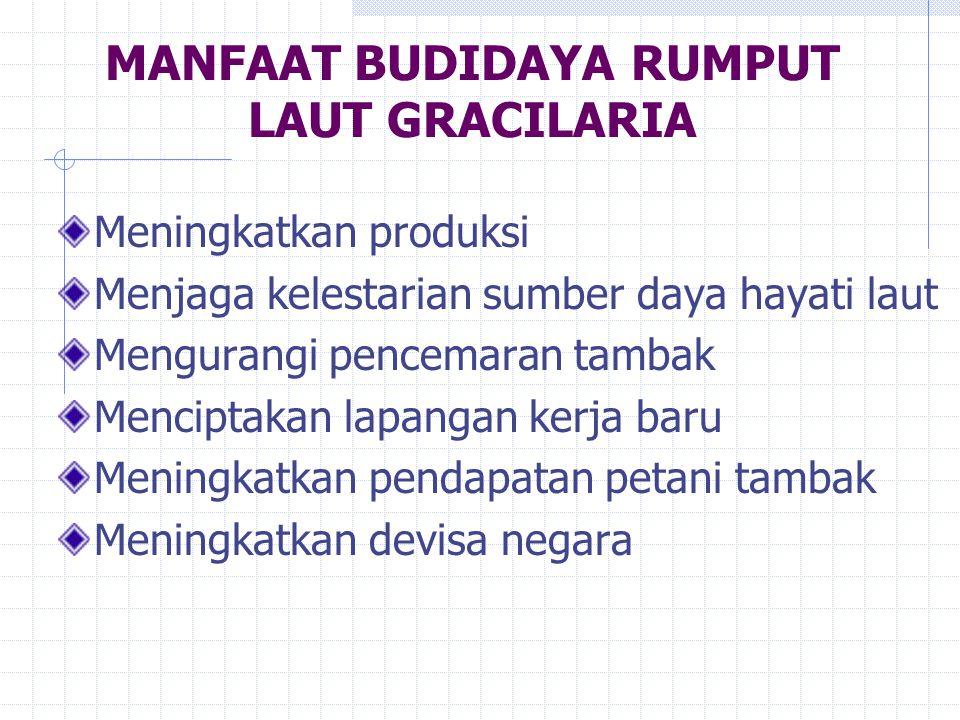 MANFAAT BUDIDAYA RUMPUT LAUT GRACILARIA