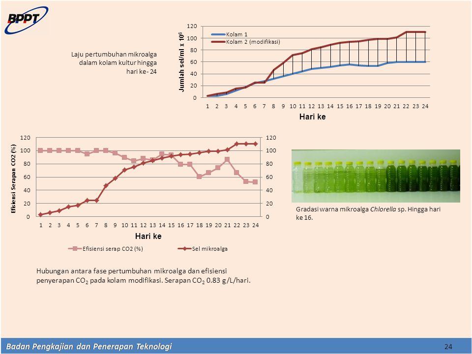 Laju pertumbuhan mikroalga dalam kolam kultur hingga hari ke- 24