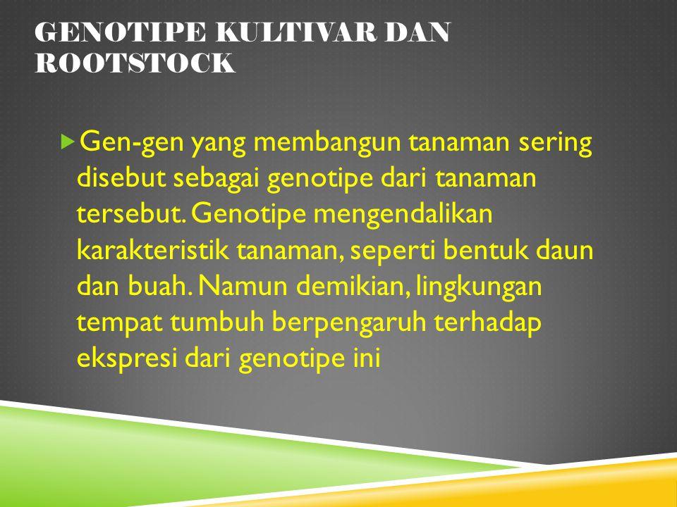 Genotipe Kultivar dan Rootstock