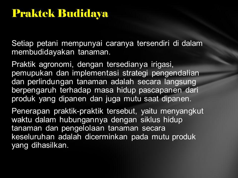 Praktek Budidaya
