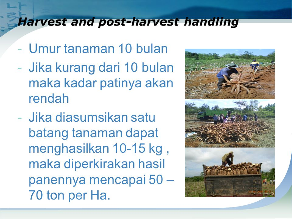 Harvest and post-harvest handling
